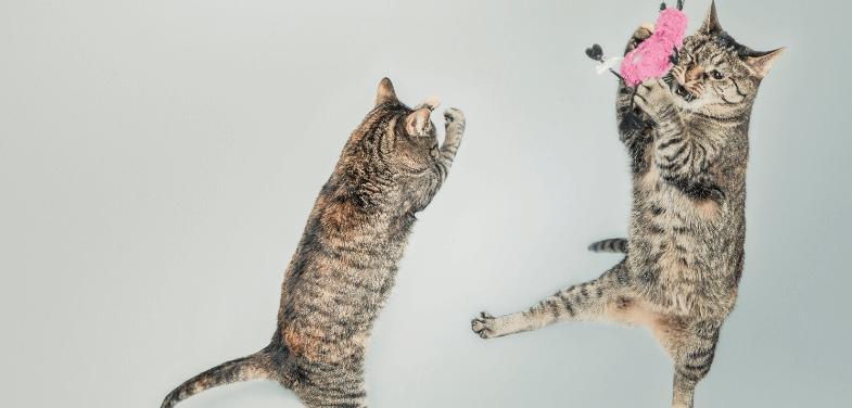 APPLAWS Miseczka dla kota tuńczyk z krewetką w galaretce 70 g