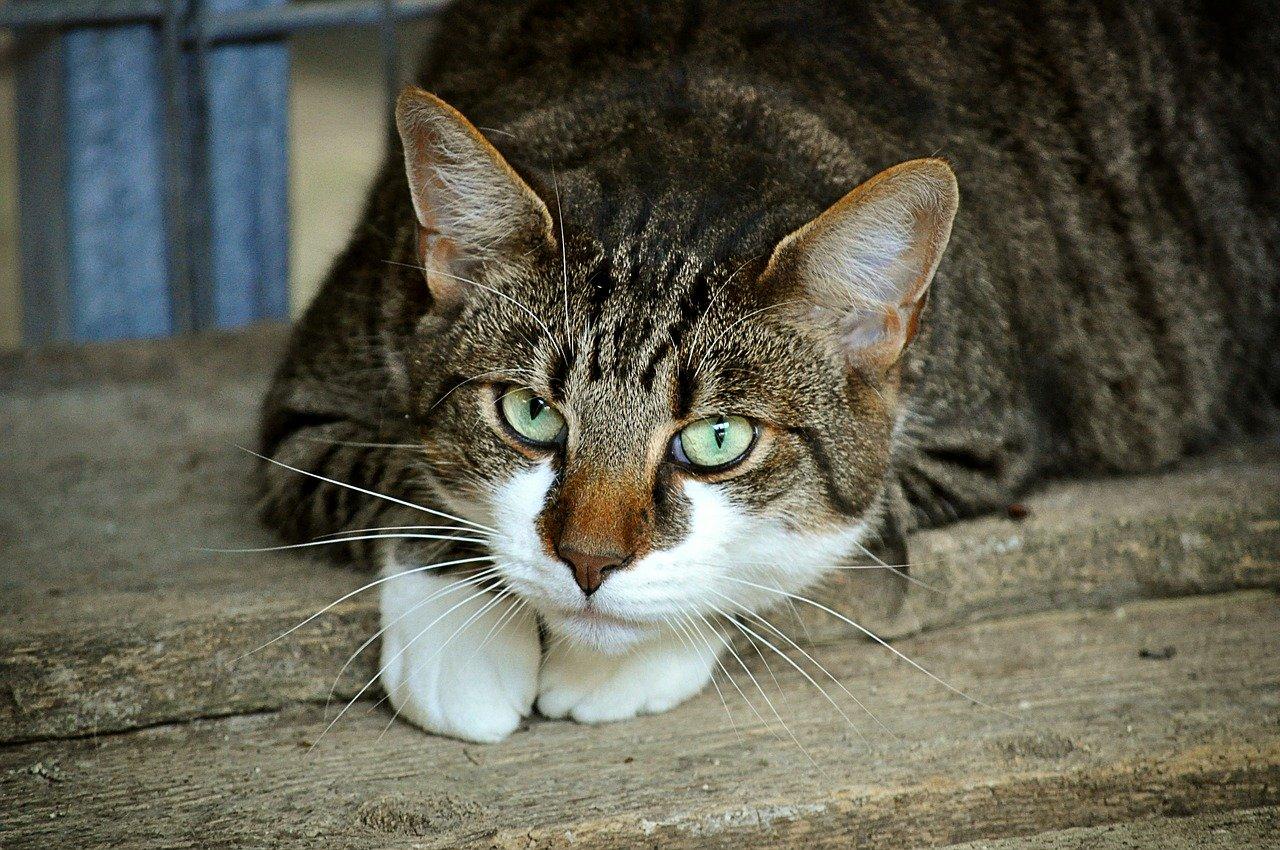 Ile żyją koty? Jaka jest średnia długość życia kota dachowca i domowego?