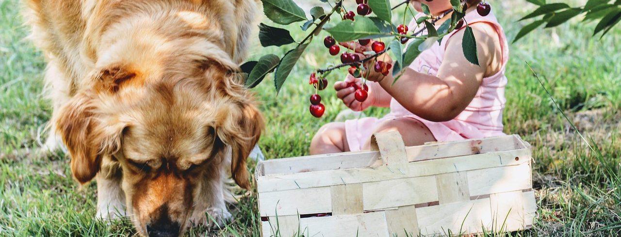 Czego nie mogą jeść psy?