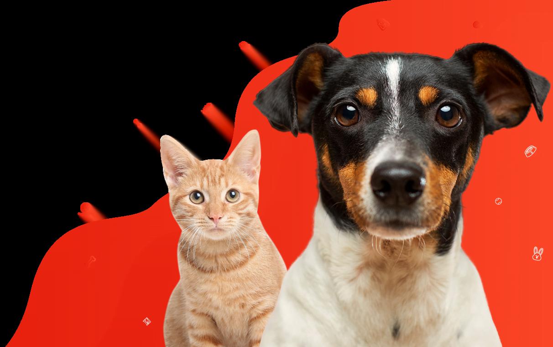Sklep zoologiczny dla psów, kotów, koni i małych zwierząt