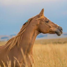 najlepsze pasze dla koni