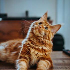 pełnowartościowa karma dla kota