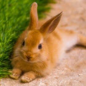 przysmaki dla gryzoni, królików i fretek