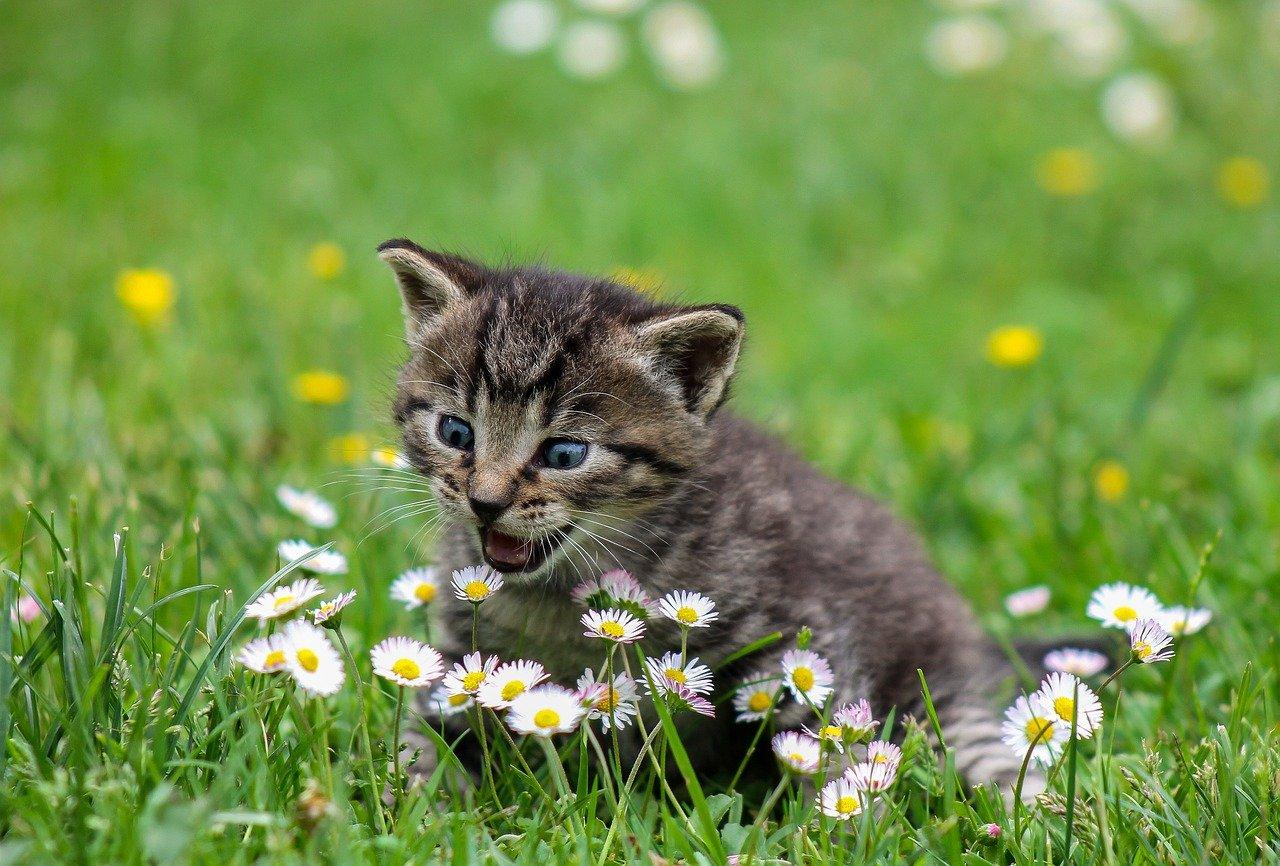 Jakie rośliny domowe i ogrodowe są bezpieczne dla kota?