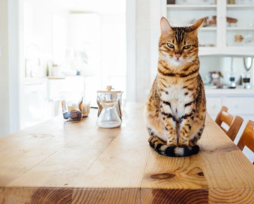 najlepsza karma sucha dla kota