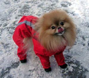 recovet ubranko czerwone dla psa